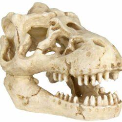 6 skulls 8-11cm