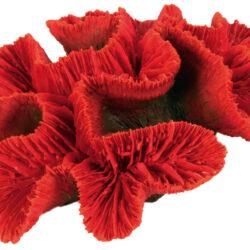 Button coral 16cm