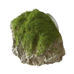 Moss Stone W.Suction cup