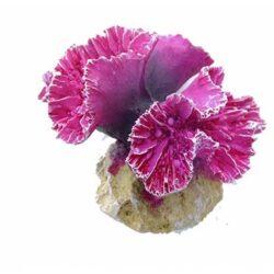 Coral Symphylia Fiskabúraskraut